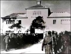 libération des camps de déportation,auschwitz